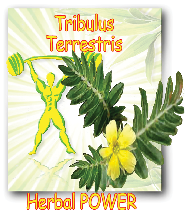 testoMAX-tribulus-terrestris
